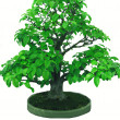 Bonsai japanese tree — Stock Photo