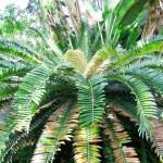 Palm tree in solar beams — Stock Photo #1294747