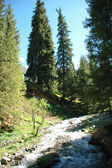 Mountain stream in the coniferous forest — Foto Stock