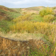 Steppe landscape — Stock Photo