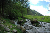 Mountain stream in the coniferous forest — Stock Photo