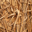 Dried grass - Stock Photo