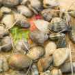Shellfishes — Stock Photo