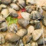 Shellfishes — Stock Photo #1286413