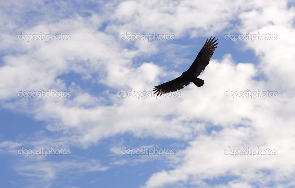 Hovering bird in the sky — Stock Photo #1740326