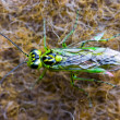 Green insect — Stock Photo