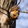 The squirrel on a tree branch - Stockfoto