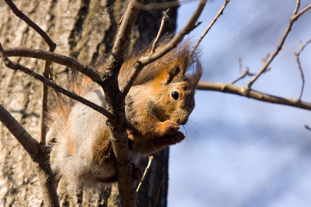 The squirrel on a tree branch in spring day — Stock Photo #1345058