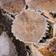 Autumn leaves after a frost — Stock Photo