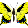 Butterfly — Stock Vector #1338704
