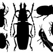 Collections of beetles — Stock Vector