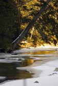 Frozen brook — Stock Photo