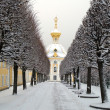 Stock Photo: Winter's avenue in garden, Peterhof