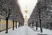 Winter's avenue in garden, Peterhof — Stock Photo
