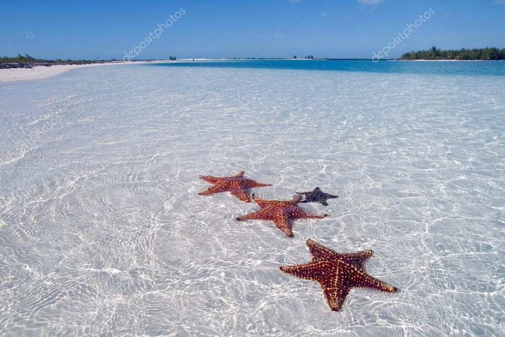 Sea star on the paradise beach, Cuba, Cayo Largo, on the paradise island on Carribbean  — Stock fotografie #1272952