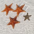 Sea star at the sand bottom — ストック写真