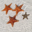 Stock Photo: Sea star at the sand bottom