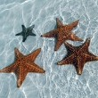 图库照片: Sea star at the sand bottom of the fine