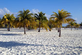 Palm on the beach — Stock Photo