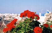 Flowers of a geranium and greek town — Stock Photo