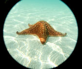 Sea star at the sand bottom — Stock Photo