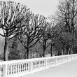 Avenue in park, early spring, Peterhof — Stock Photo