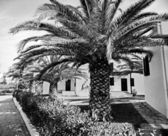 Palm avenue and apartments in Greece — Stock Photo