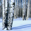 Stock Photo: Winter snow birch forest, vertical