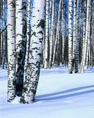 Winter snow birch forest, vertical — Stock Photo