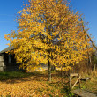 Autumn in Russian village - Stock Photo