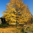 Stock Photo: Autumn in Russivillage