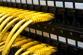 Yellow network cables — Stock Photo