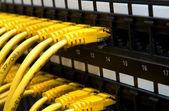 Cabos de rede amarelo — Foto Stock