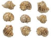 Conjunto de conchas de moluscos marinhos — Fotografia Stock