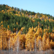 Siberian taiga in autumn — Stock Photo