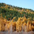 Royalty-Free Stock Photo: Siberian taiga in autumn