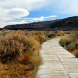 Grassy Lake Pathway - Stock Photo