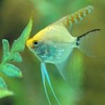Fish feeding in Aquarium — Stock Photo #1297619