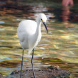 Watchful Crane Bird — Stockfoto #1297718