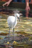 Watchful Crane Bird — Stockfoto