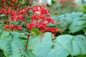Red Elongated Flowering plant in bloom — Stock Photo