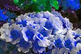 Dew drops on Flower — Stock Photo