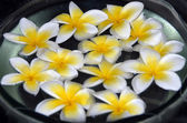 Yellow Plumeria flower Spa — Stock Photo