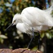 Stock Photo: White Crane Bird