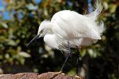 Biały żuraw ptak — Zdjęcie stockowe