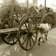 Stock Photo: Bullock cart ride