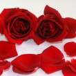 Red Rose flower petals spa aromatherapy - Stock Photo