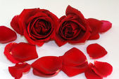 Red Rose flower petals spa aromatherapy — Stock Photo