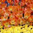 Stock Photo: Orange Tulip and yellow daisy Flowers