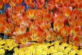 Tulipe orange et fleurs de marguerite jaune — Photo